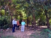 "Vereadores atestam: ""Matinha continua abandonada"""